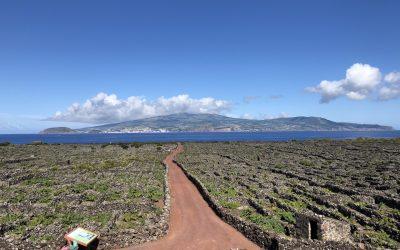 Vinhas da Criacao Velha Trail