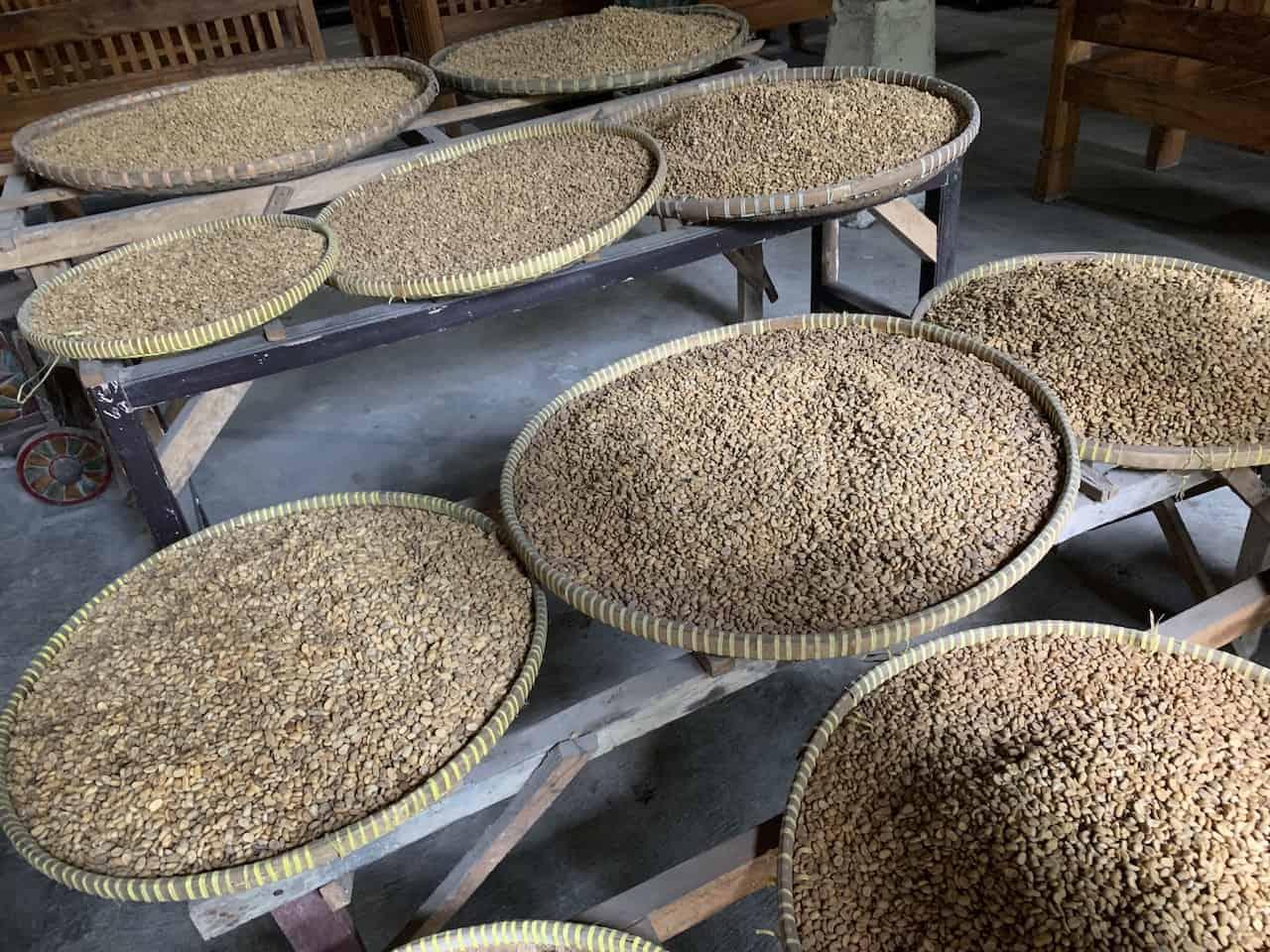 Kopi Luwak Java