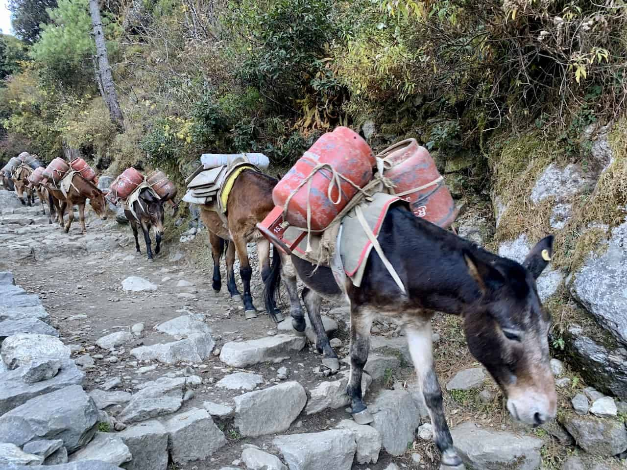 Everest Base Camp Donkeys