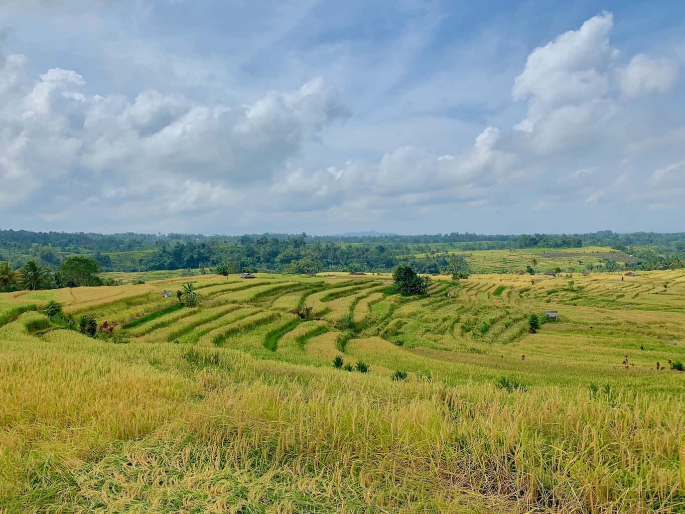 A Guide to the Jatiluwih Rice Terraces | Trekking, Map, Views & More!