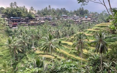 A Complete Ubud Itinerary | 3 Days in Ubud