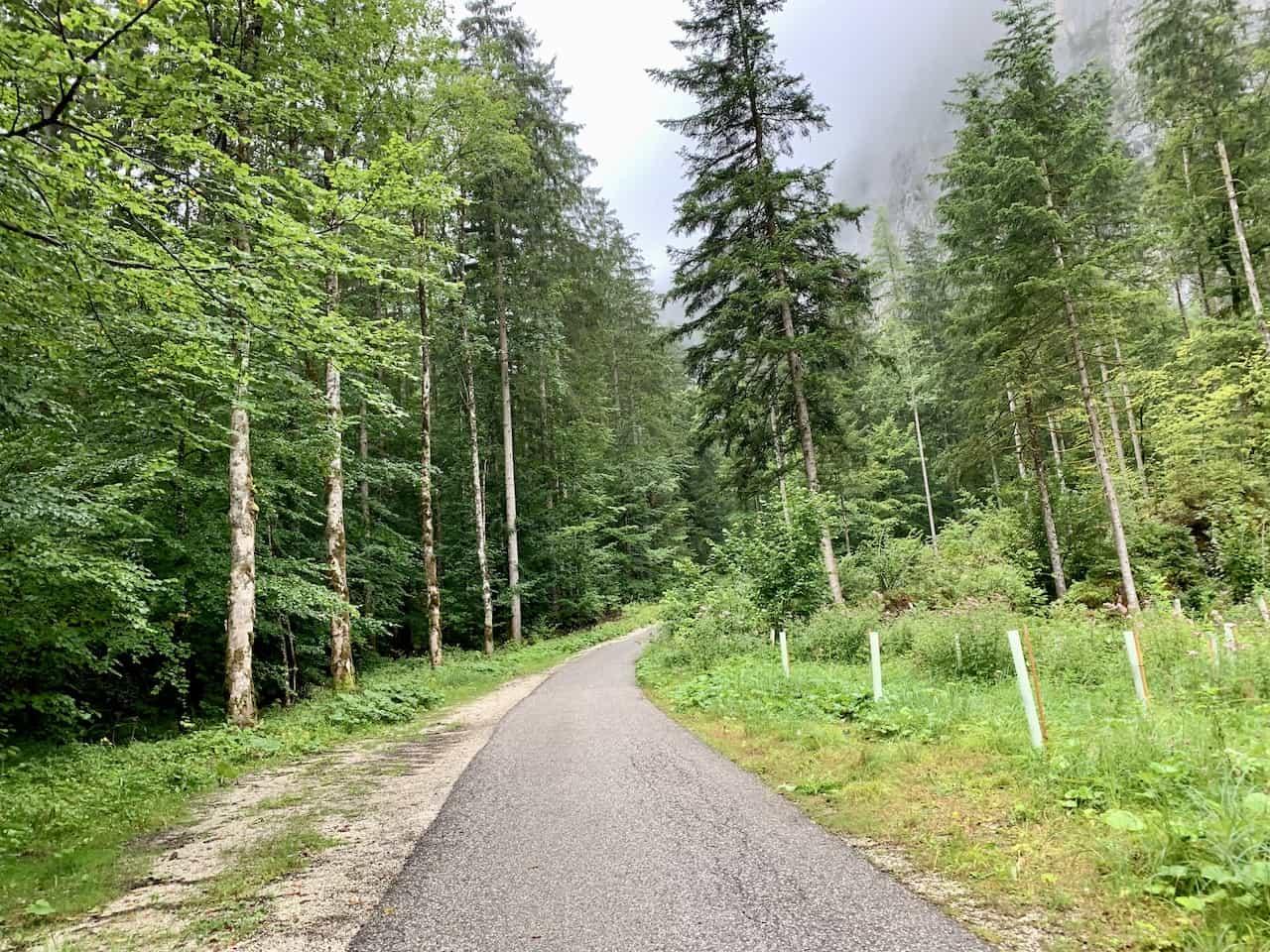 Waldbachstrub Forest