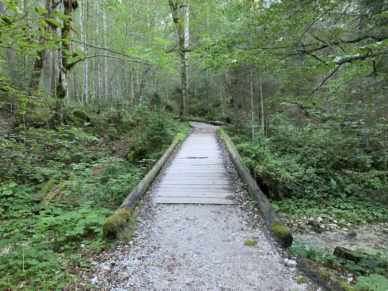 Zugspitze Forest