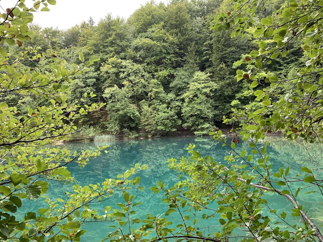 Plitvice Lakes National Park Forest