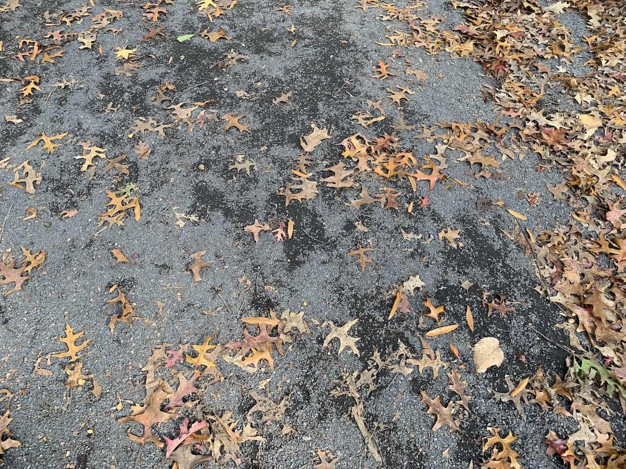 Bridle Path Central Park Terrain