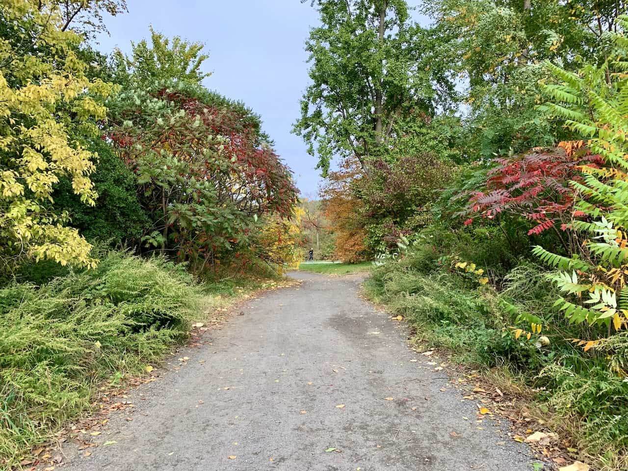 Bridle Path North Meadow