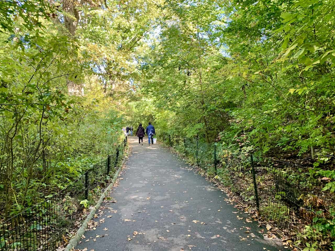 Hiking in Central Park