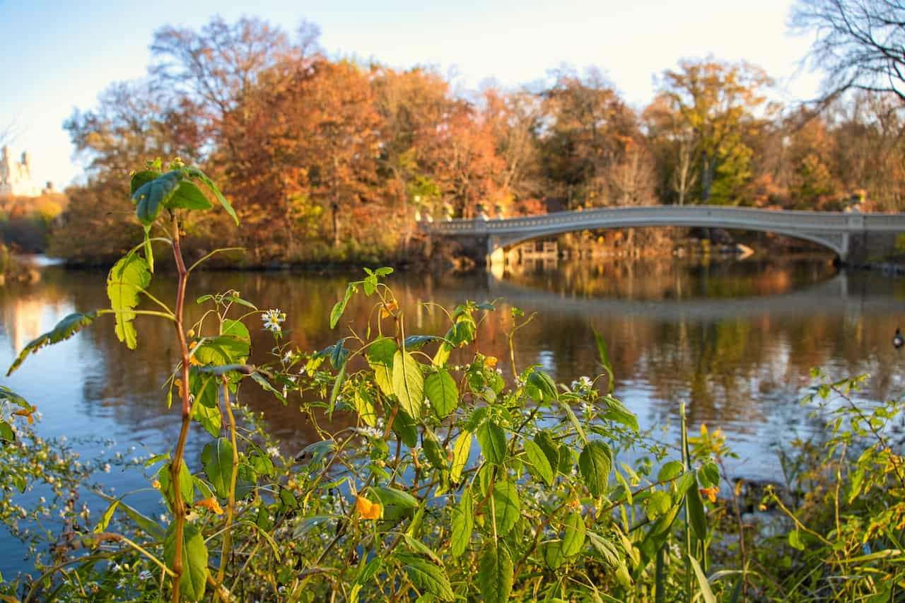 Bow Bridge Greenery