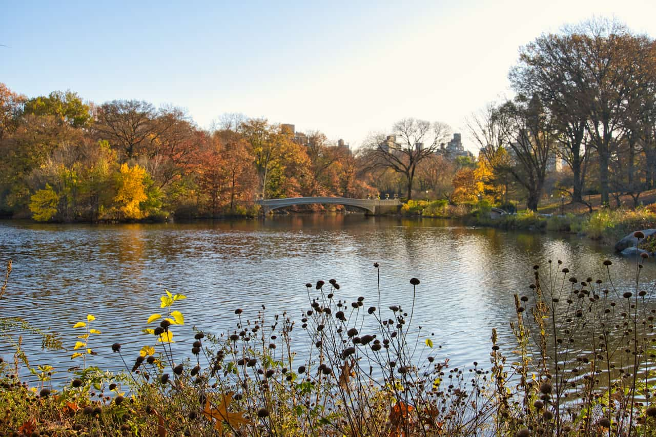 Central Park Bow Bridge Viewpoint