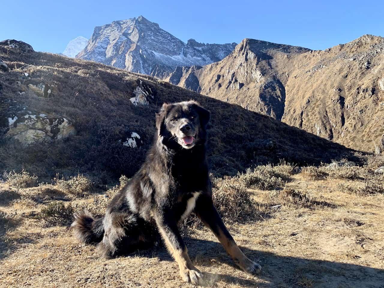 Himalayas Nepal Dog