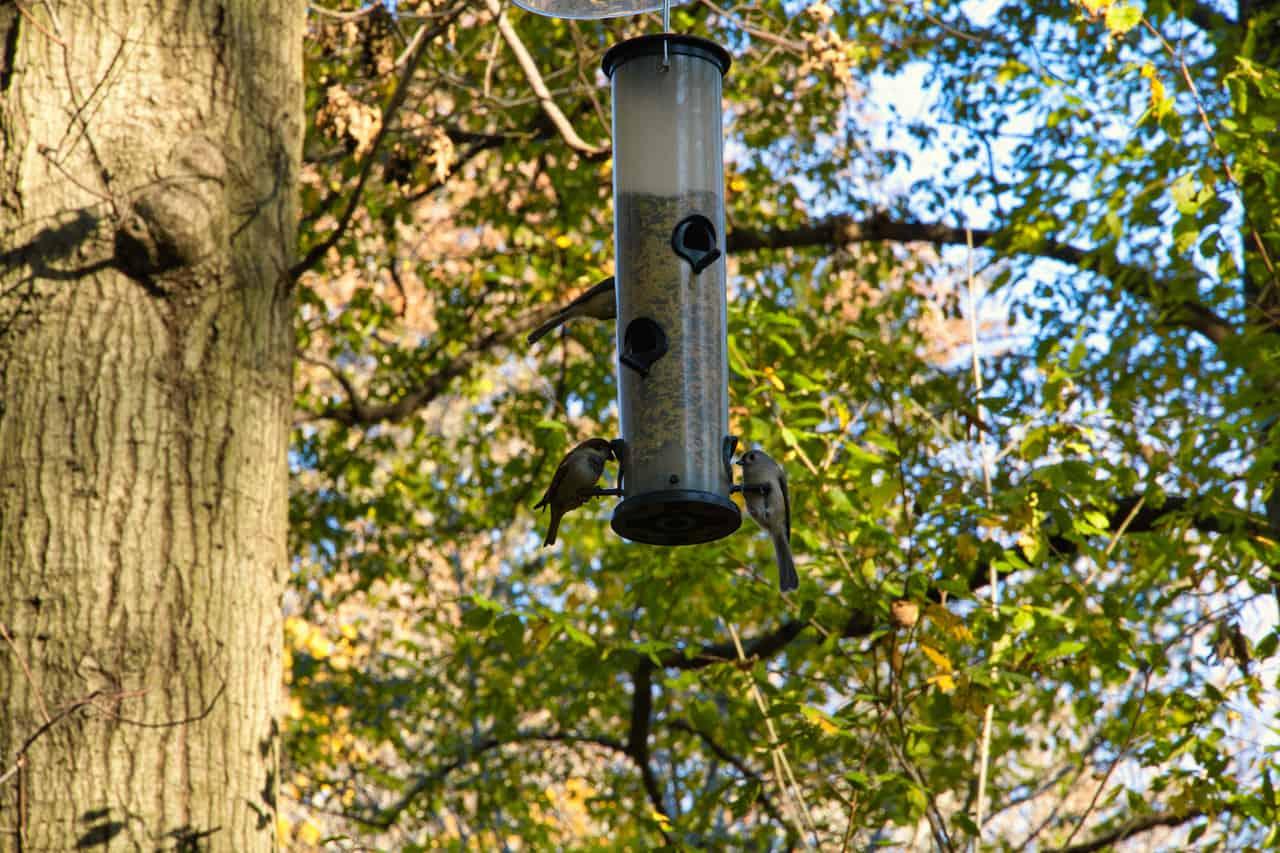 Bird Watching Central Park