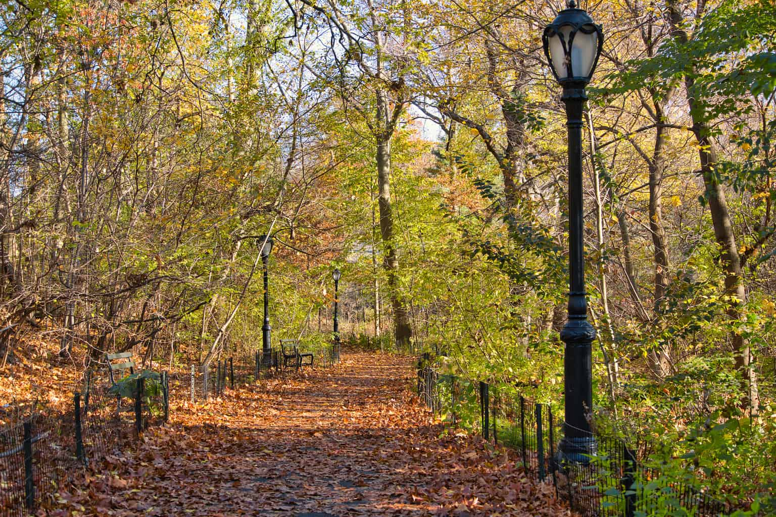 The Ramble of Central Park | Trails, Viewpoints, Map and More