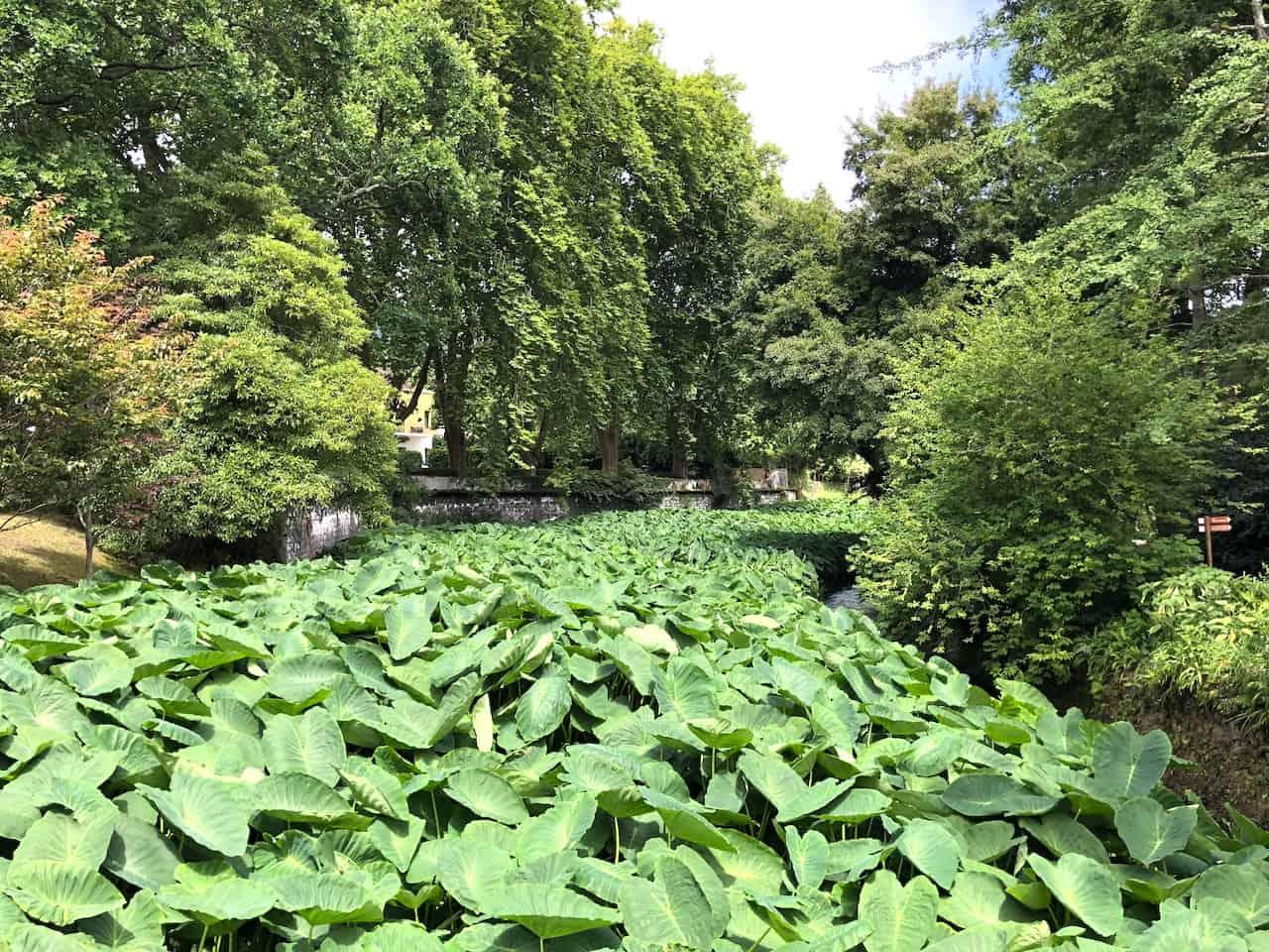 Terra Nostra Park Gardens