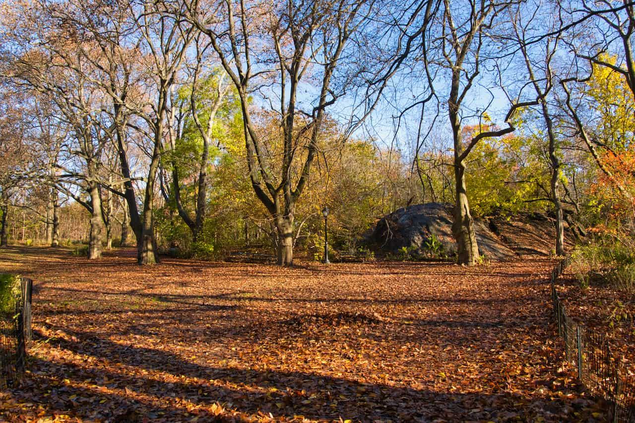 The Ramble Meadow