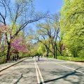 Central Park Full Loop Running