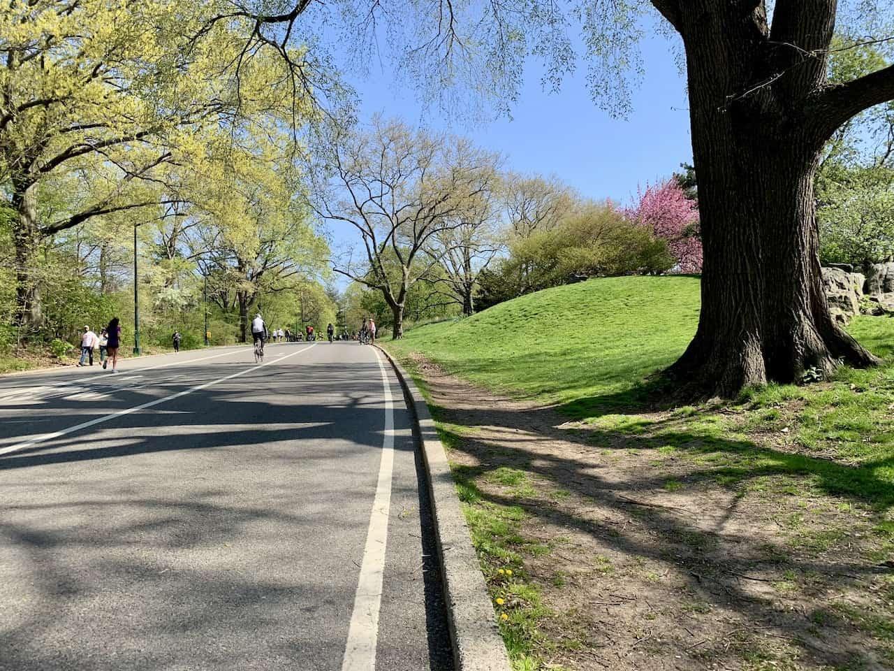 Dirt Path Central Park