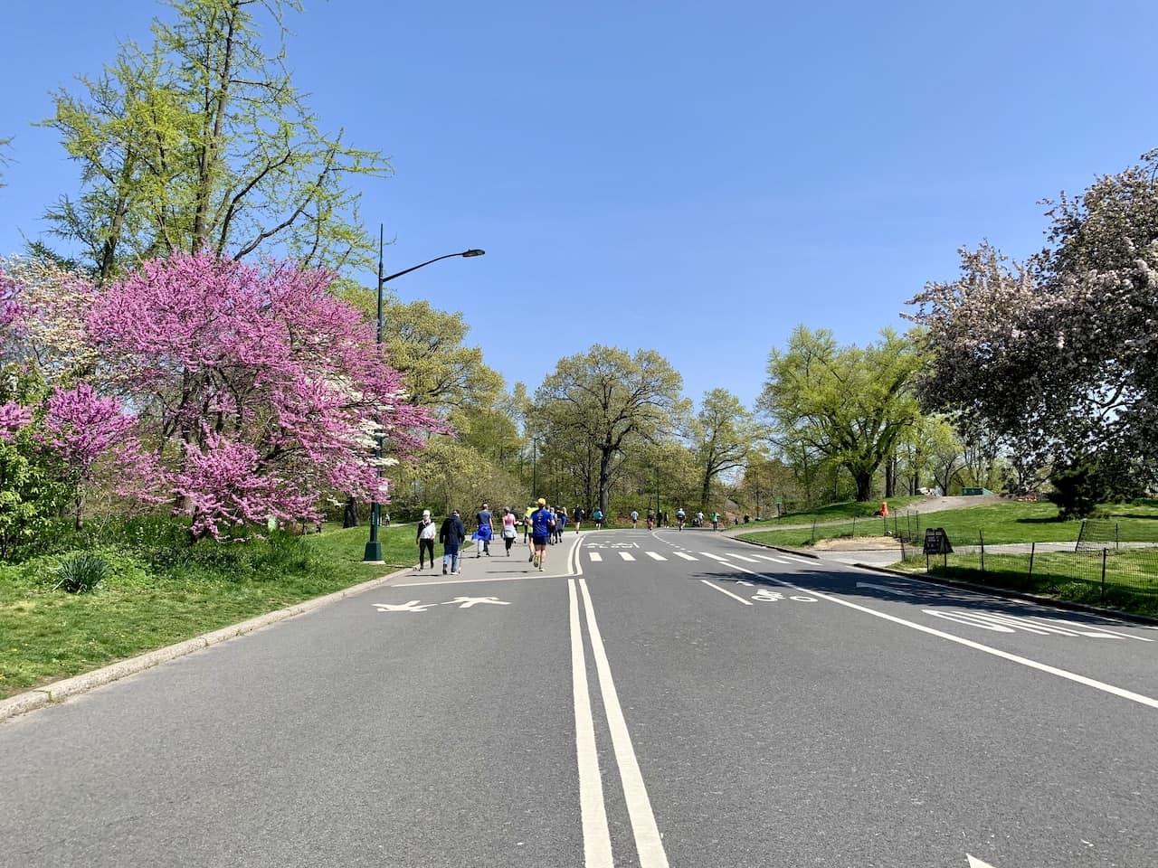Jogging Central Park