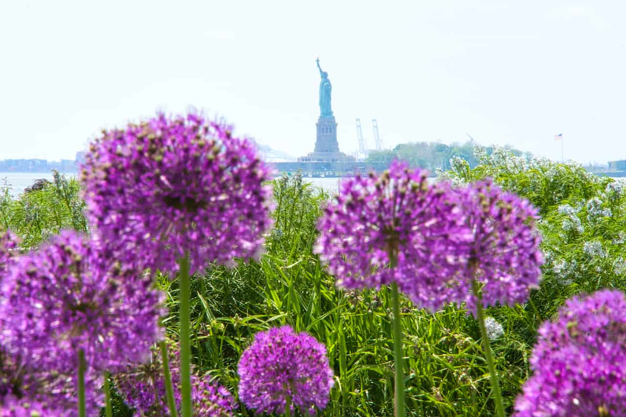 Statue of Liberty Flowers