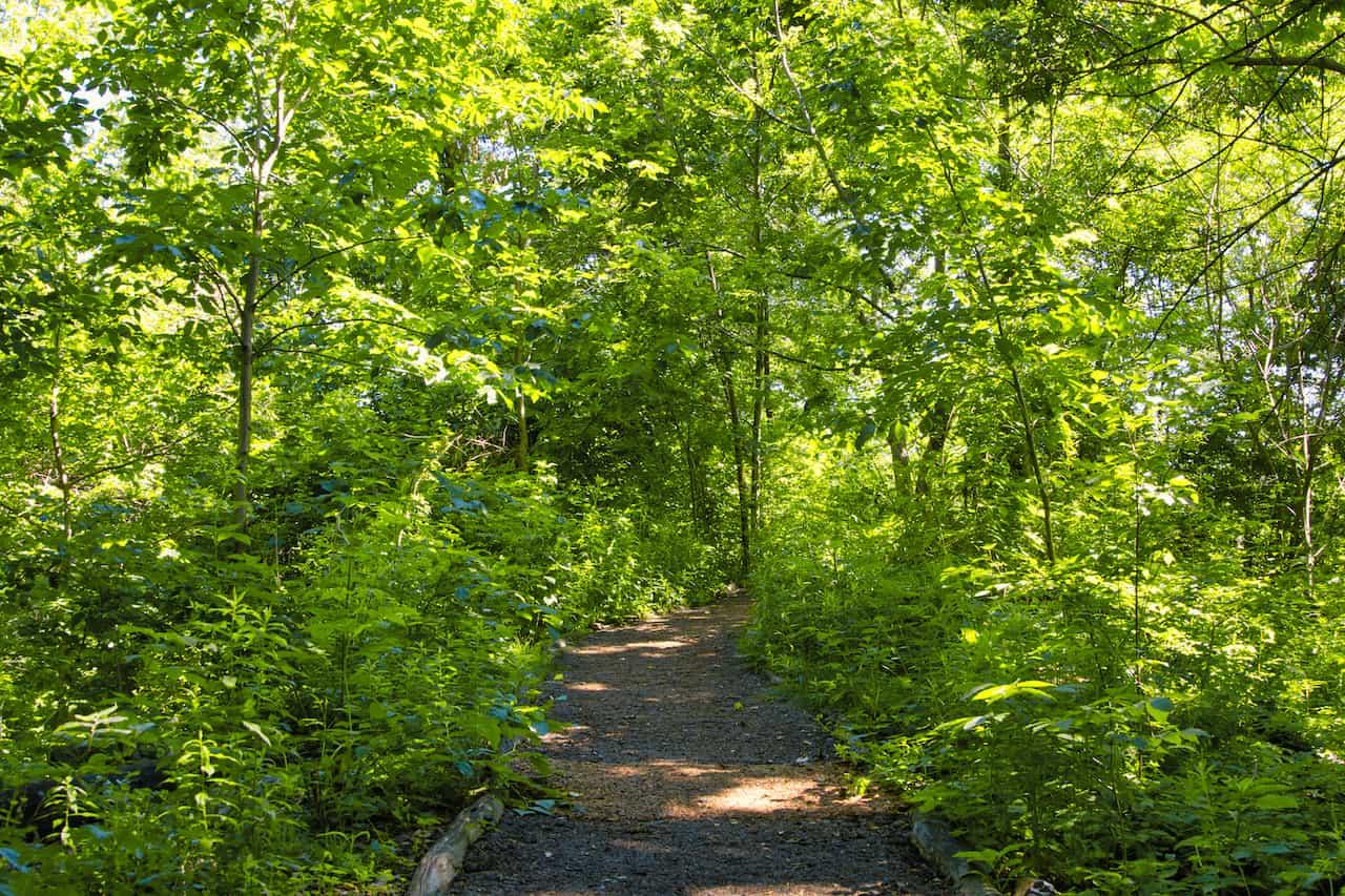 Hallett Nature Sanctuary Walk