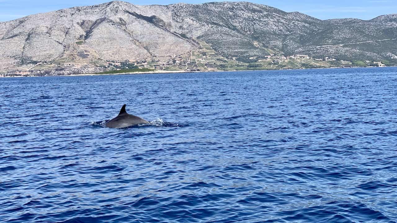 Korcula Dolphins