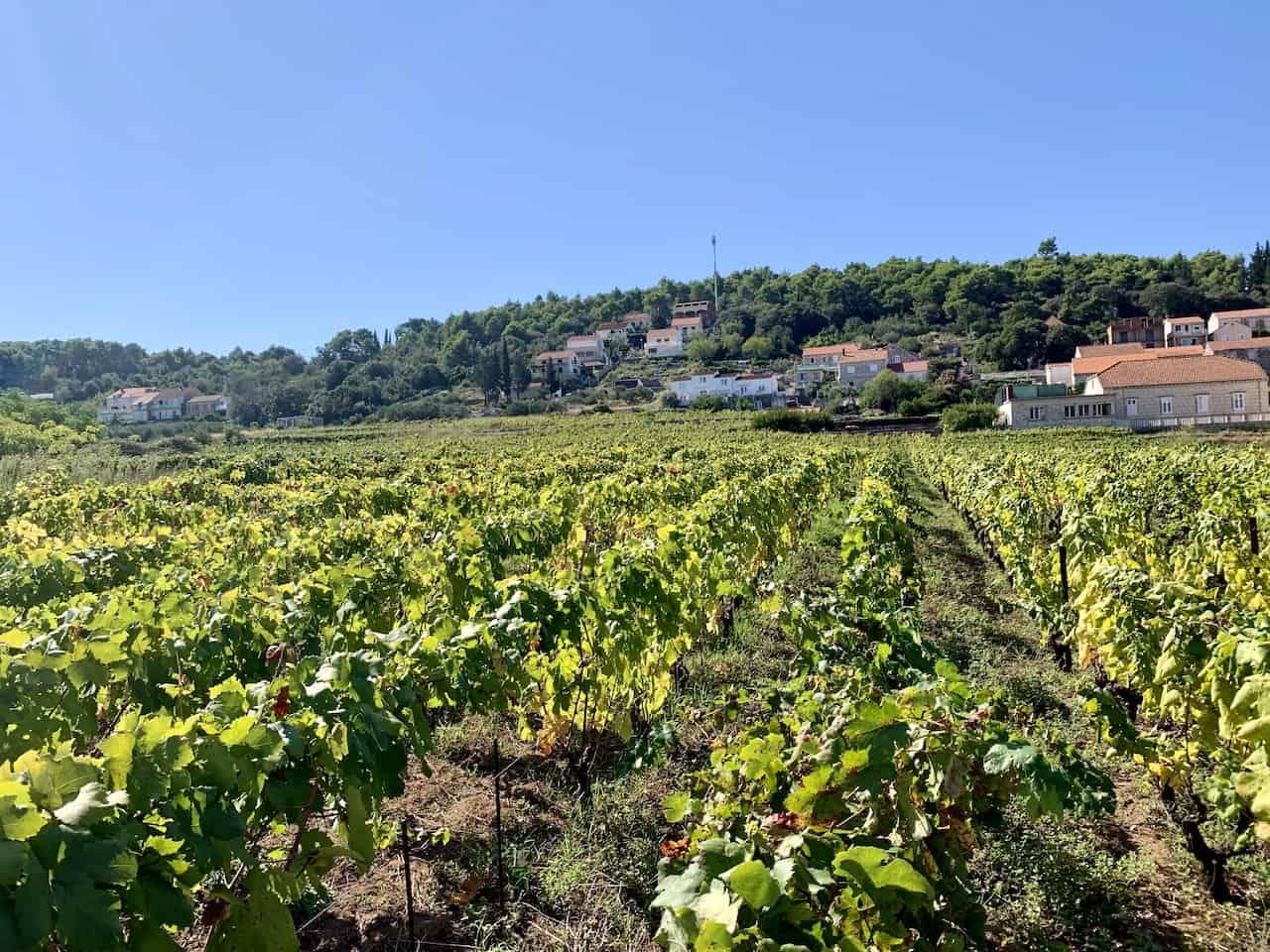 Korcula Vineyards