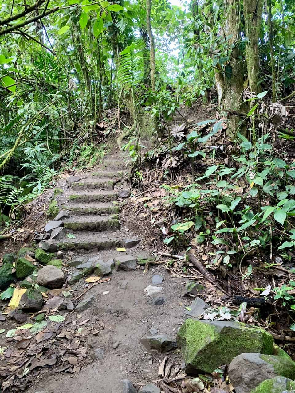 Arenal 1968 Forest Trail Stairs