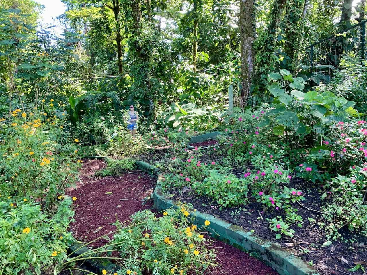 Butterfly Garden Fortuna
