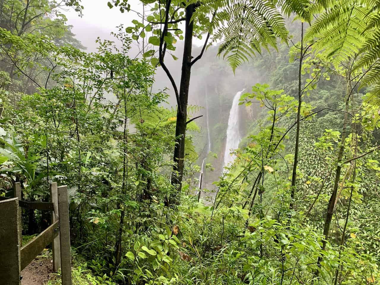 Catarata del Toro Rainforest