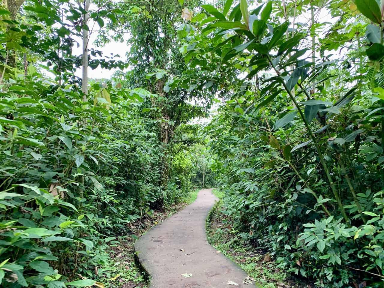 Rio Celeste Pathway